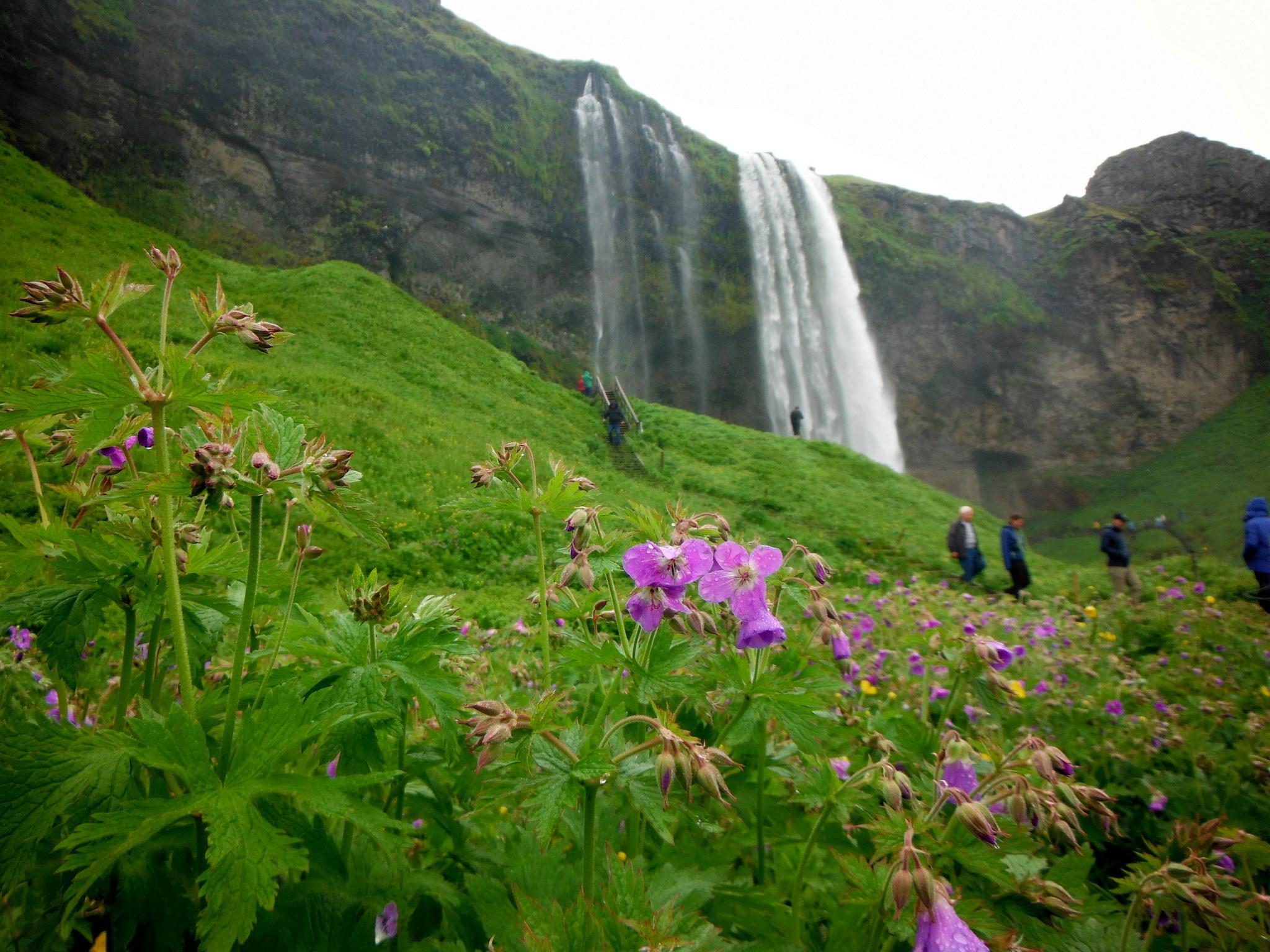 Wodospady Islandia